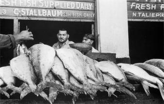 District 6 Fishmonger