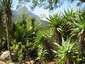 Kirstenbosch botanical_Gardens3