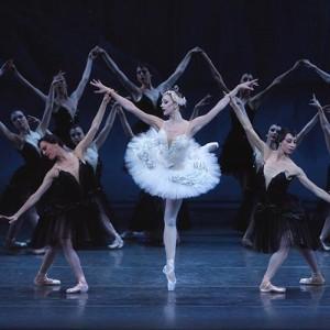 Swan Queen