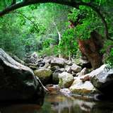 Woodsy Creek Bed
