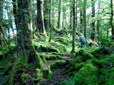 Te Anau Rainforest