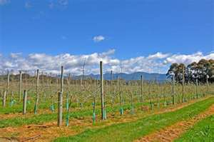 Motueka Valley Vineyards