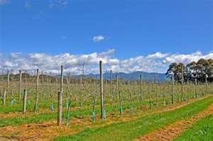 Motueka Valley Vineyards