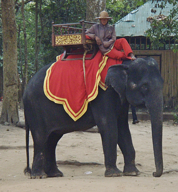 Angkor Elephant
