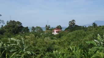 Jungle from Cabana