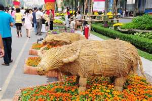 Tet Straw Buffalo Display