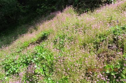 Hillside in Bloom