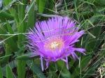 Castle Flower