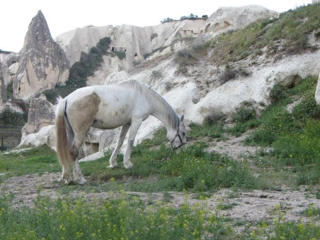 Göreme White Horse