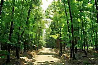 Blansko Forest