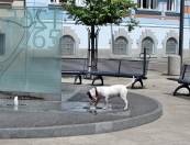 Dog & Fountain