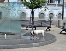 Dog & Fountain