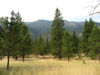 Meadow Near Enterprise