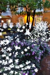 Day 360 (26th December) Christmas Lights Cartagena