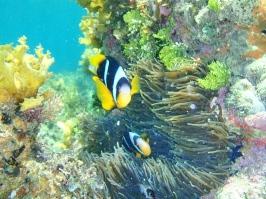 Islas_quirimbas
