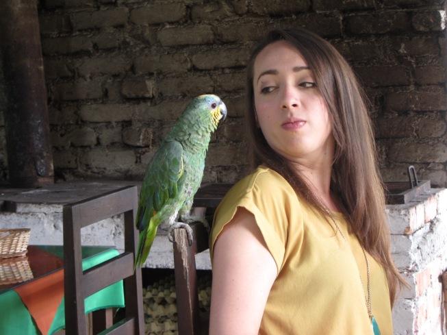 Parrot & B&B Guest