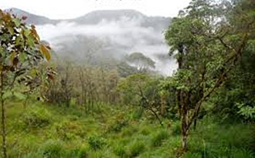 Llanganates Mountains Ecuador