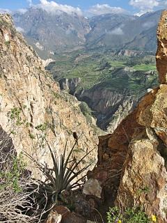 Canyon Panorama
