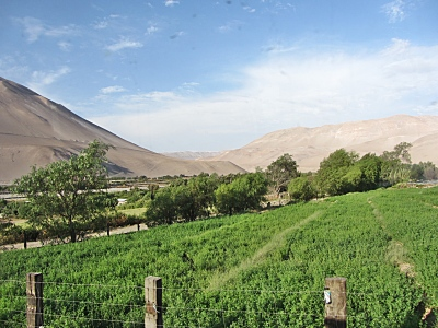 Chilean Valley Arica