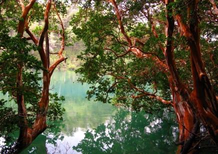 Arrayanes Trees