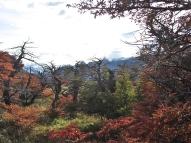 Autumn Flora