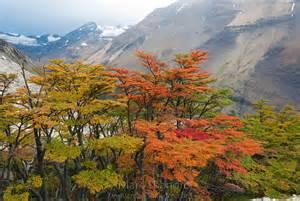Lenga Trees