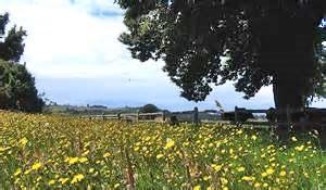 Meadow Cabalgata Laurel