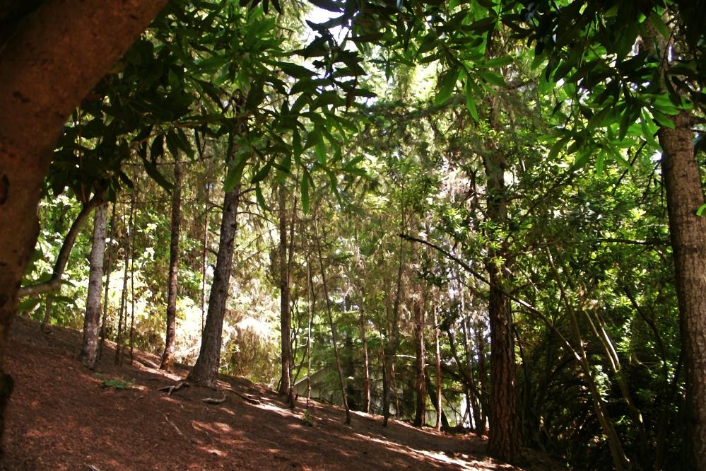 Woods Behind