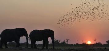 Botswana Savute-Elephant-Camp-Night-Drive