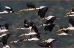 Lake Manyara National Park Kenya