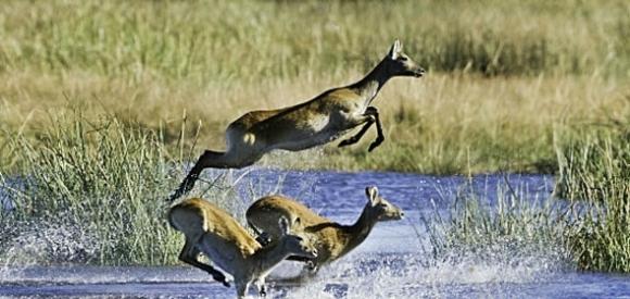 Linayanti Region Botswana