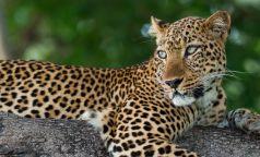 South Luangwa National Park Zambia