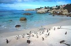 Penguins Boulders Beach