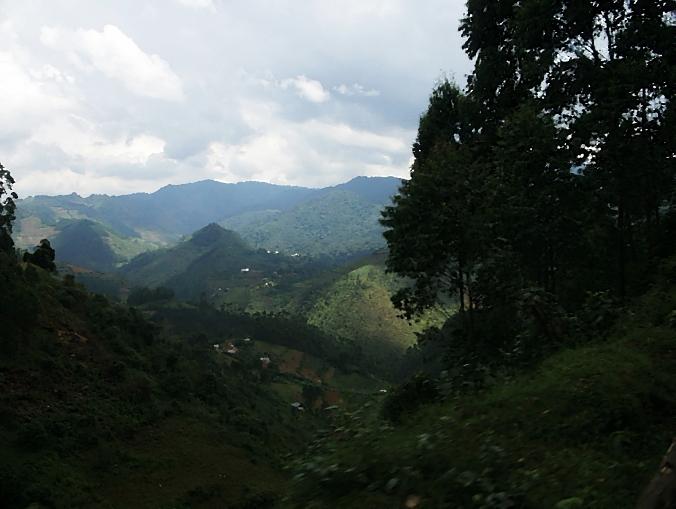 Ugandan Jungle