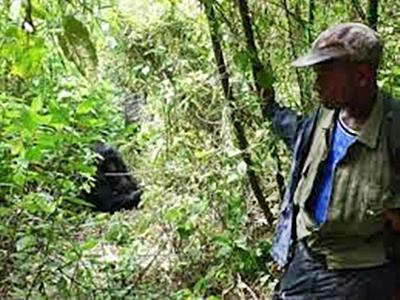uganda-gorilla-tracker