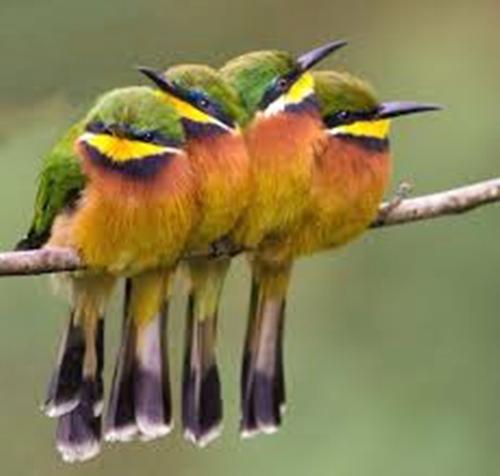 Cute Little Bee Eaters