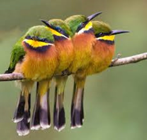 Cute Little Bee Eaters