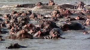 Hippo River Gathering