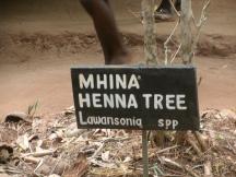 Henna Tree