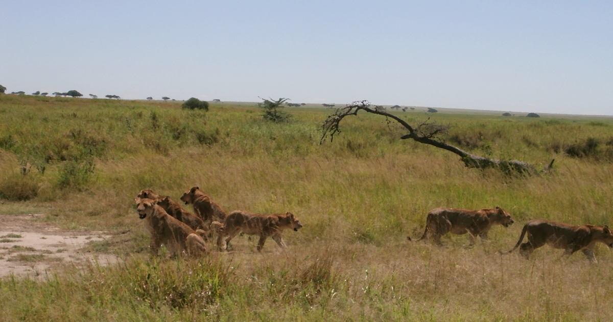 Serengeti National Park and Ngorongoro Crater