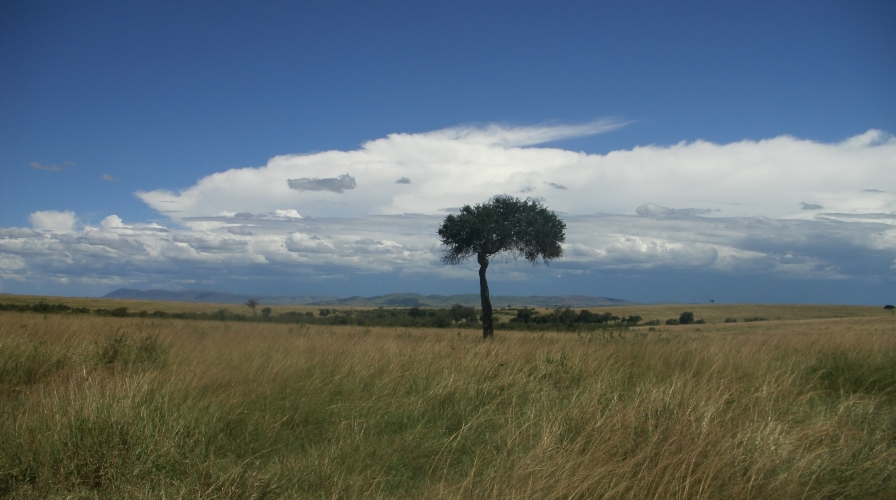 Mara Tree