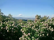 Blooming Jade