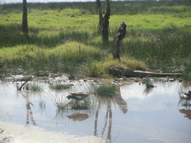 Wetlands Lake Nakuru