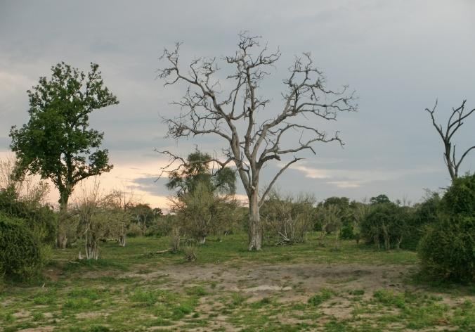 Chobe Landscape