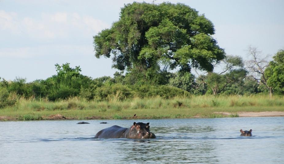 Delta Hippos