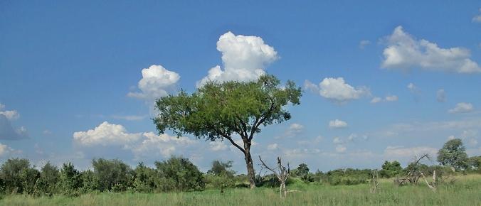 Lone Delta Tree