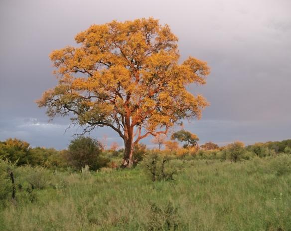 Glowing Delta Tree