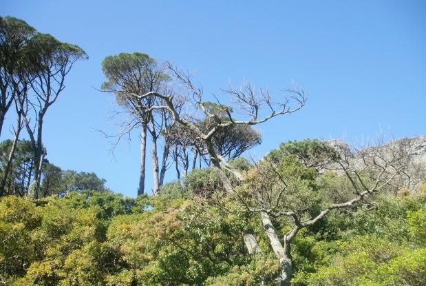 Fynbos