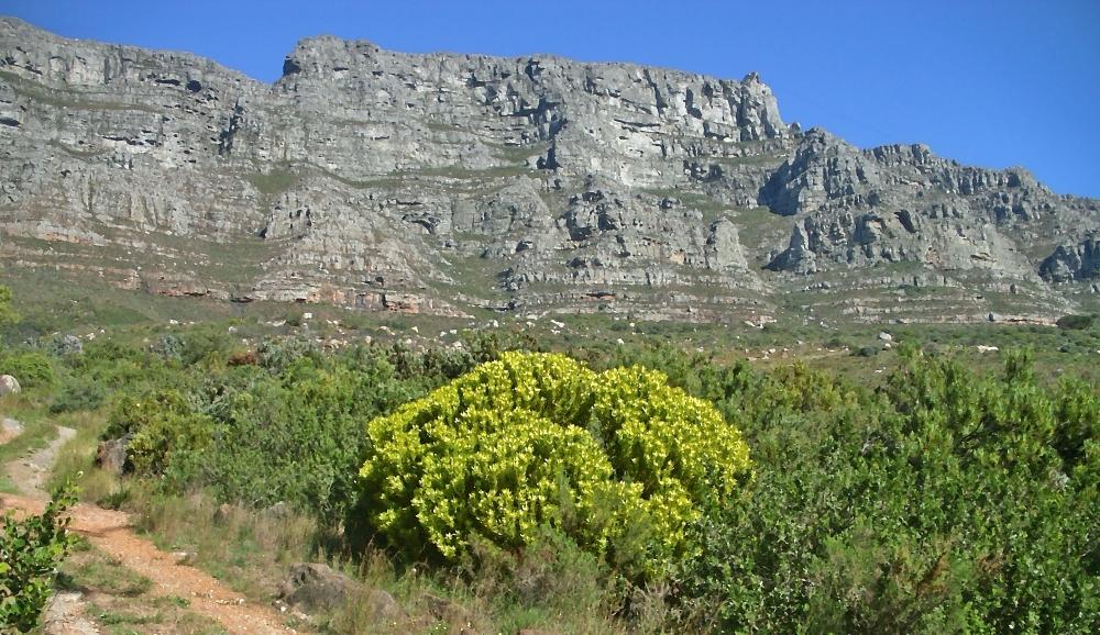 Protea Fynbos