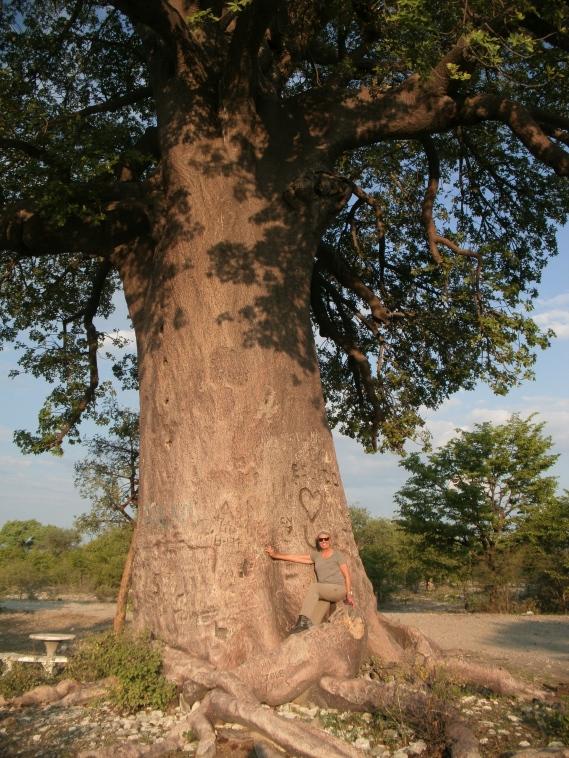 Under a Baobab